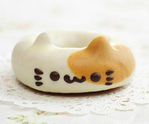 cat, donut, and food image