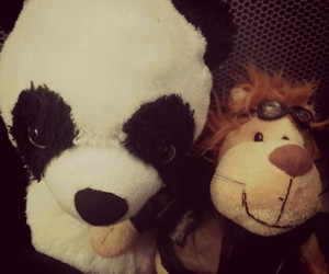 couple, panda, and sweet image