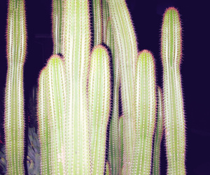 cactus and nature image