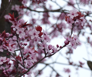april, flower, and grunge image