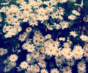 wallpaper flowers image
