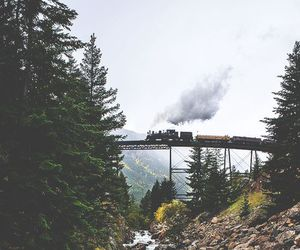 bridge, forest, and indie image