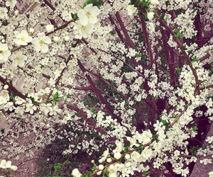 flowers and japan image