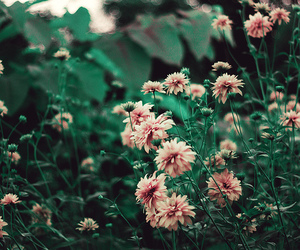 flowers and pale image