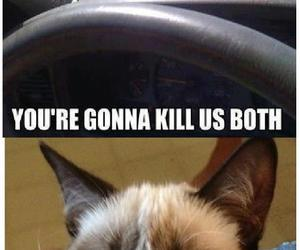 funny, cat, and grumpy image