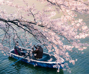 japan, flowers, and pink image