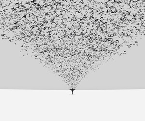 bird, black and white, and white image