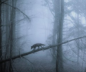 fox and woods image