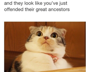funny, cat, and pet image