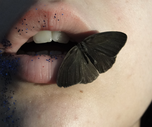 butterfly, kiss, and lips image