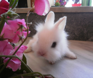bunny, pet, and pink image