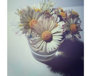 beautiful, lovely, and daisy image