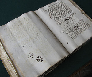 book, cat, and paws image