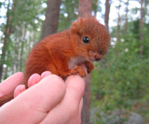 baby animals, cute animals, and squirrel image