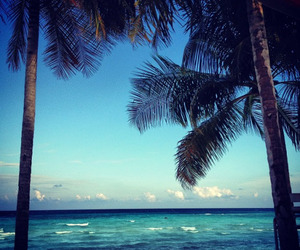 beautiful, ocean, and palms image