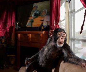 brown, funny, and monkey image