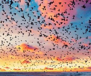 bird, sky, and sea image