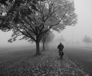 bicycle, leaves, and lumix image