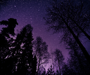 stars, tree, and night image