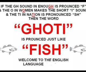 english, fish, and funny image