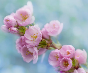 april, spring, and cherryblossom image