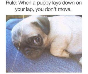 cute and rule image