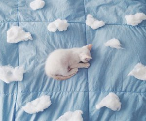 blue, funny cat, and sleeping cat image