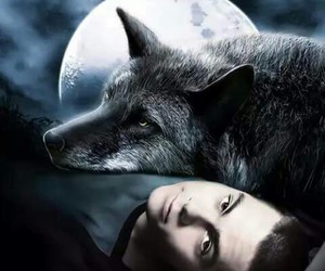 teen wolf, wolf, and stiles image