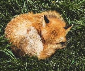 animal, fox, and magic image