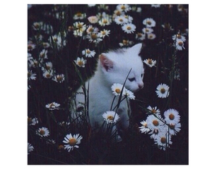 cat, daisy, and field image
