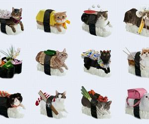 cat, sushi, and neko image