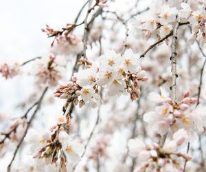 flowers, nature, and soft image