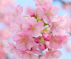 макро, вишня, and цветение image