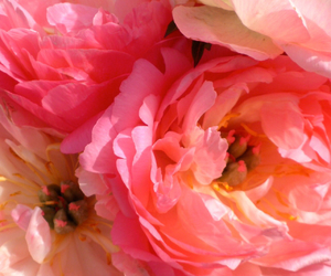flower, good, and pink image