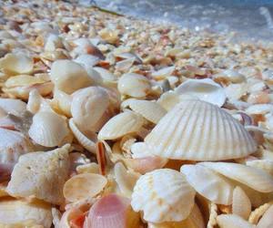sea, seaside, and summer image