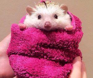 animal, hedgehog, and cute image