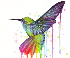 bird, art, and rainbow image