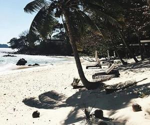 nature, palm trees, and sea image