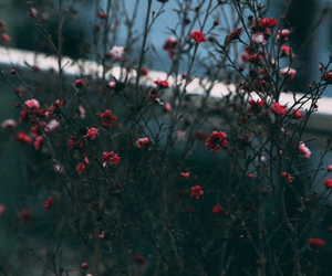 flowers, grunge, and red image