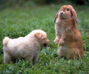 animal, dog, and bunny image