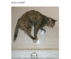 Hot, funny, and tumblr image