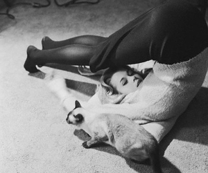 cat and b&w image