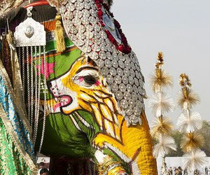 animal, india, and color image
