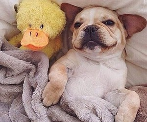 dog, cute, and duck image