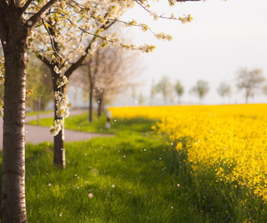 spring, love, and yellow flower image