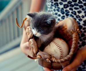 cat, cute, and baseball image