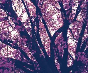 black, blossom, and cherry blossom image