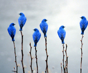 bird, blue, and nature image