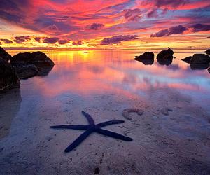sunset, beach, and starfish image
