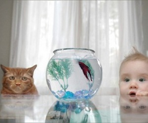 cat, fish, and baby image